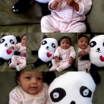 The Panda Doll : Make Your Own